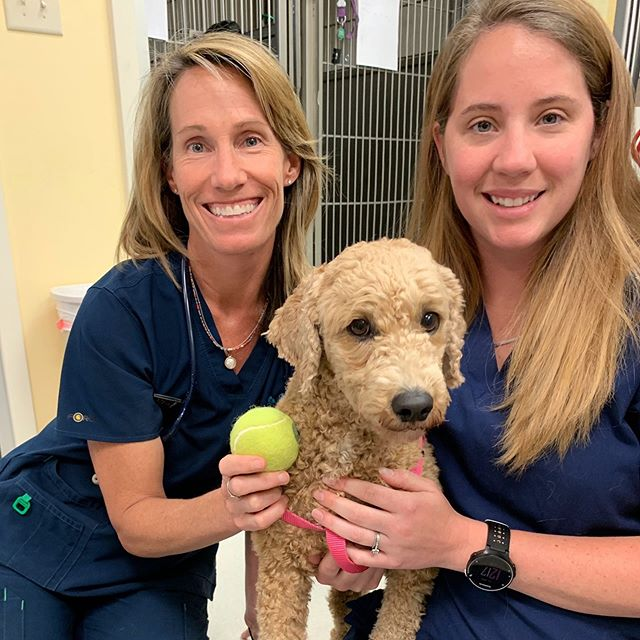Zoe came in for an exam today while her mom is getting ready for her match in the @volvocaropen. We want to wish Kveta Peschke and all the players good luck this week! 🎾#danielislandvet #danielisland #volvocaropen