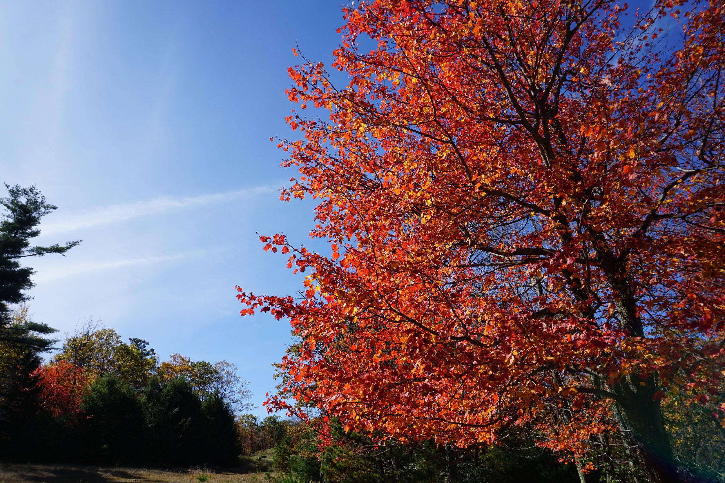 Poconos, PA in autumn