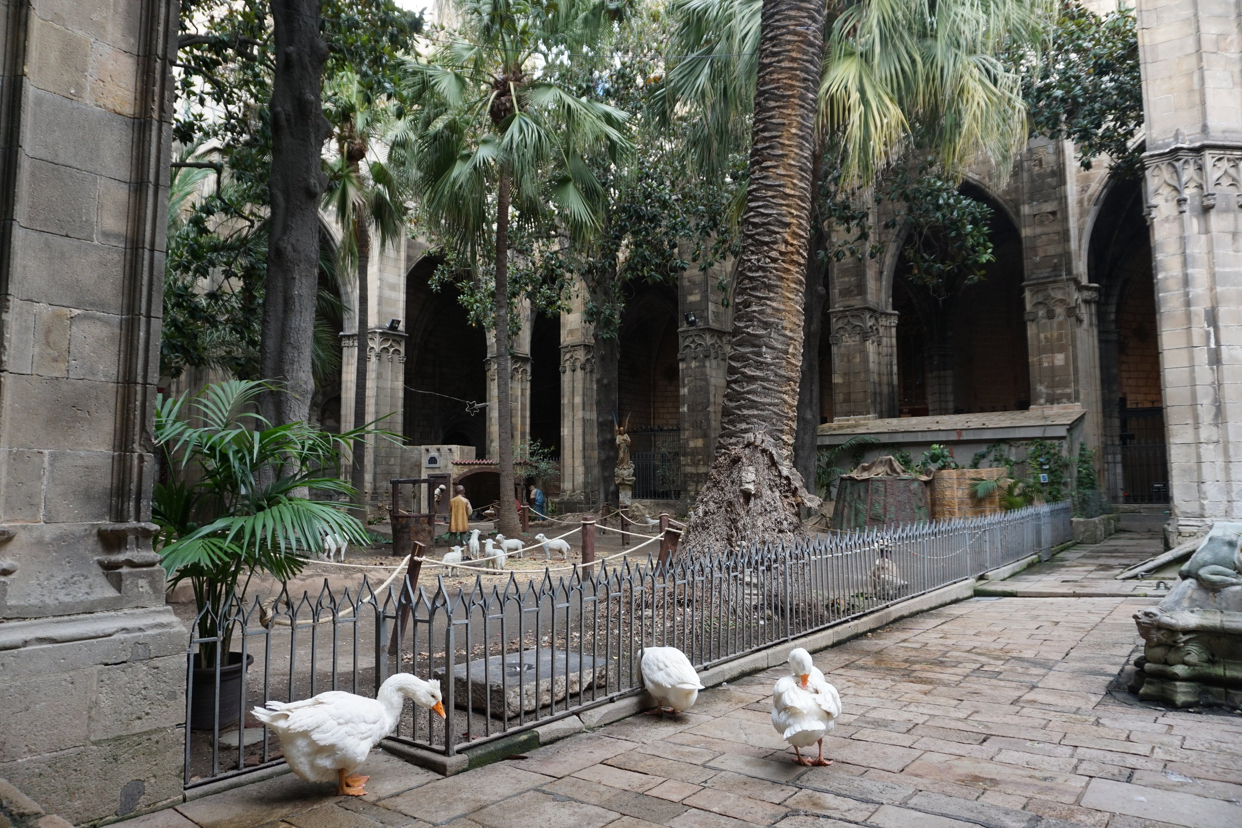Cloister with 13 white geese