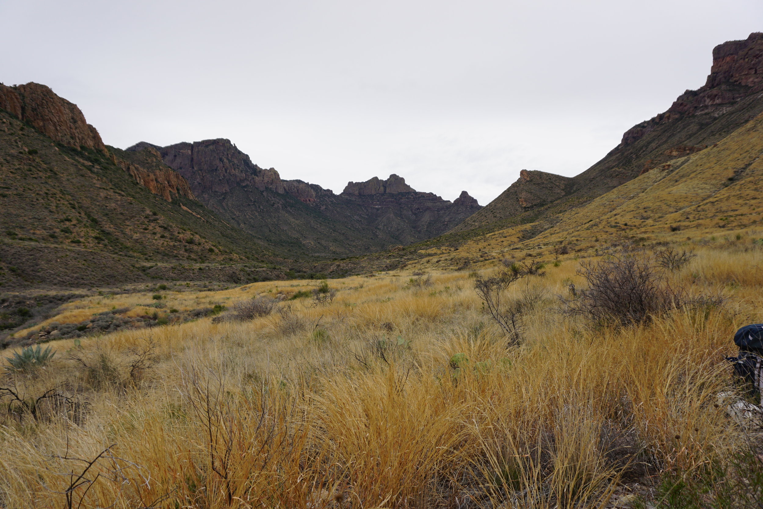 DSC04131 desert grasslands Big Bend Texas.JPG