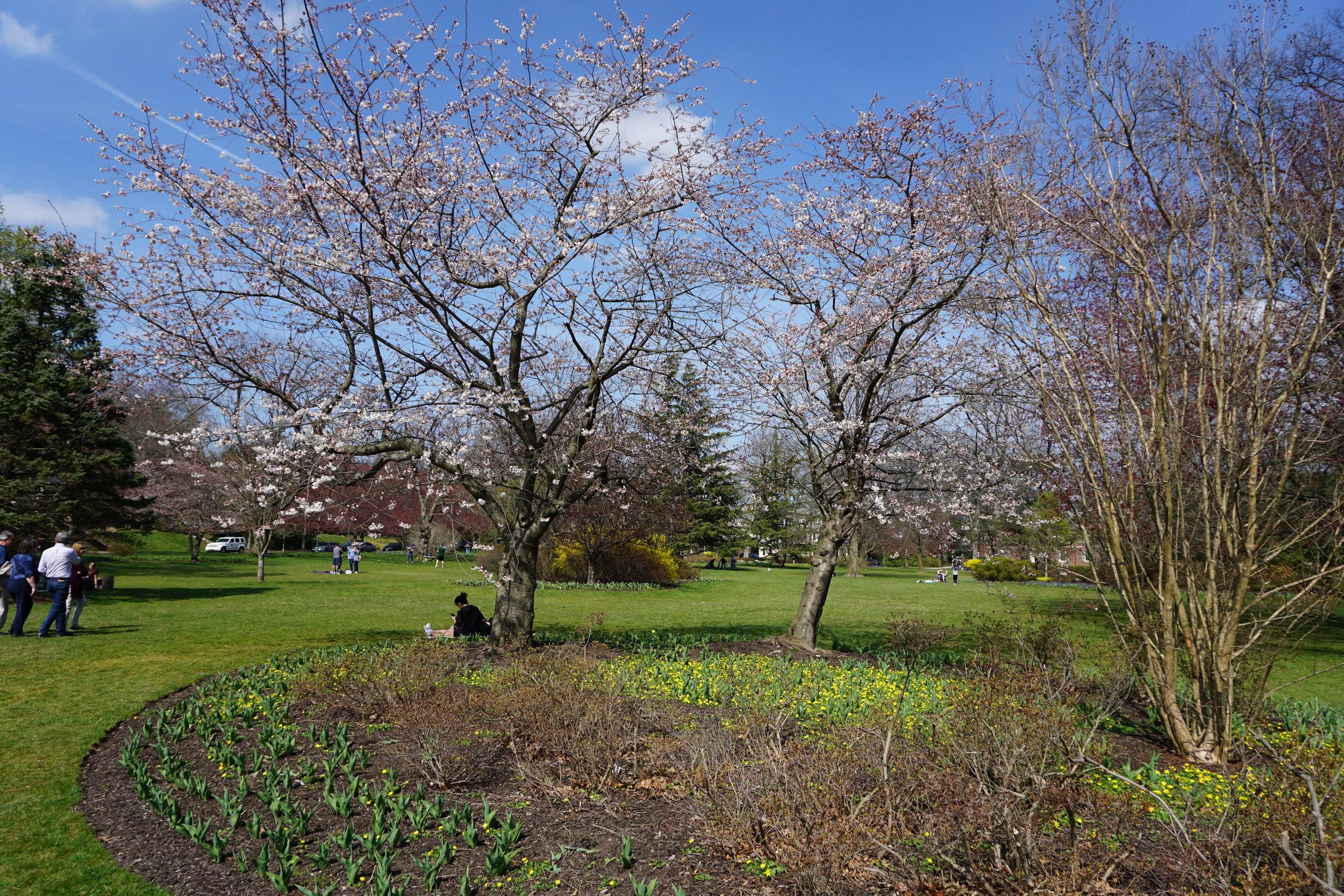 Sherwood Gardens Baltimore.JPG