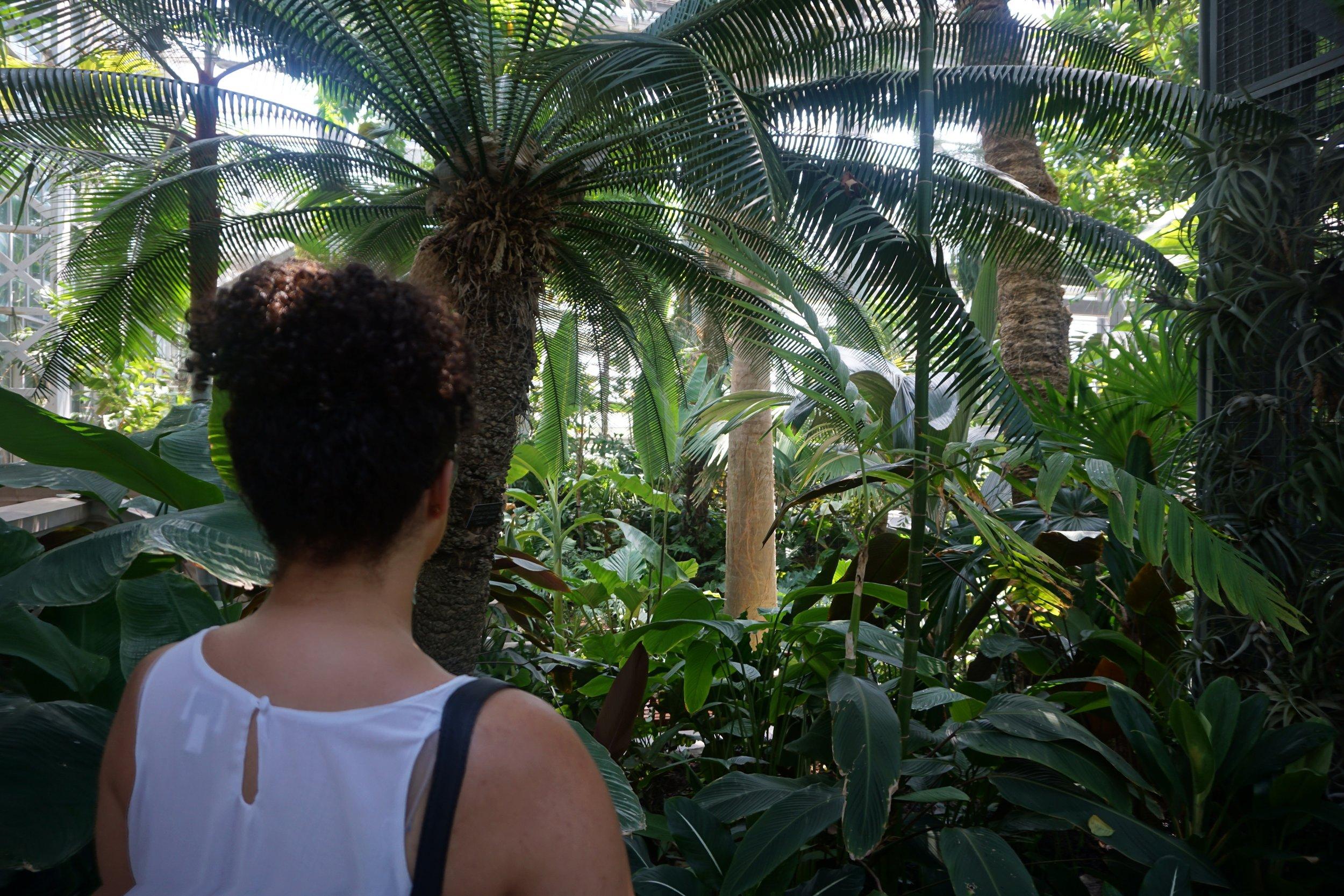 National-Botanic-Gardens-Washington-DC.JPG