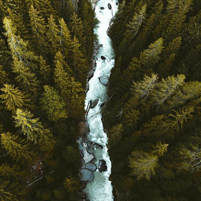 Up above and full of love 🌲  Capture by: @cameraismyeye  Tag #lanternpresets for a chance to get featured!