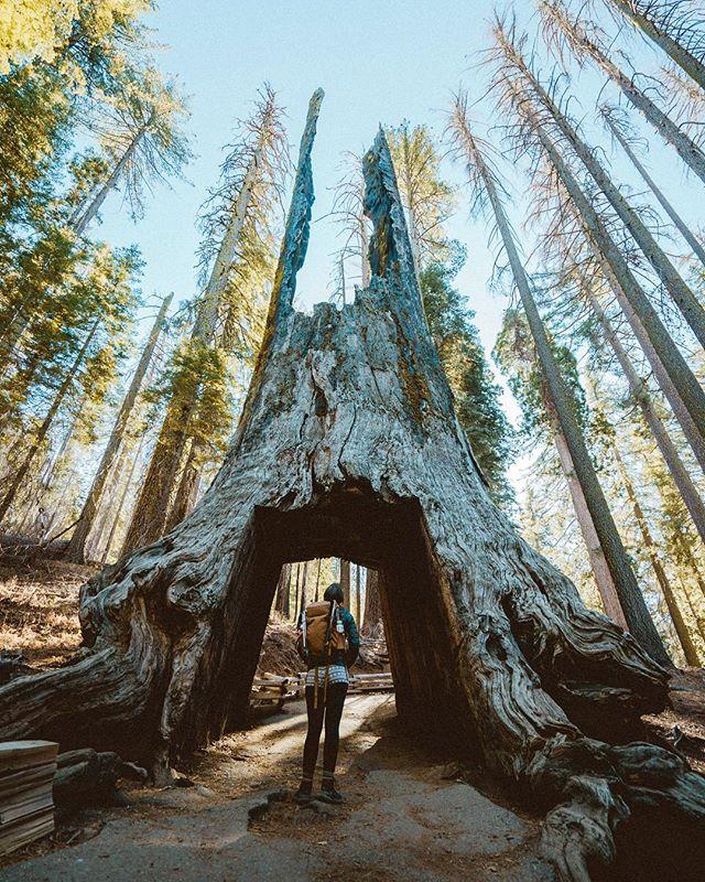 Yosemite 🌲🏞 Preset: Eldridge Pack: Pro Pack