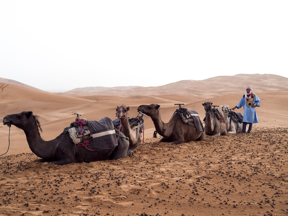 Alexandra-Marie-Interiors-Travel-Photography-Prints-Camel-Ride-Safari-Merzouga-Desert-21.jpg