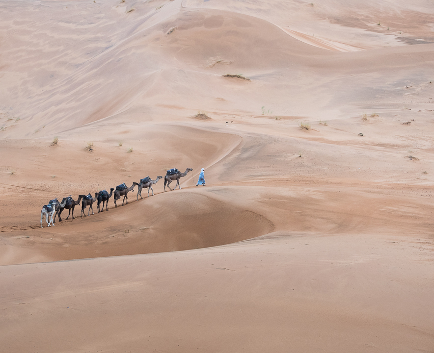 Alexandra-Marie-Interiors-Travel-Photography-Prints-Morroco-Safari-Merzouga-Desert-Camel-Ride-25.jpg