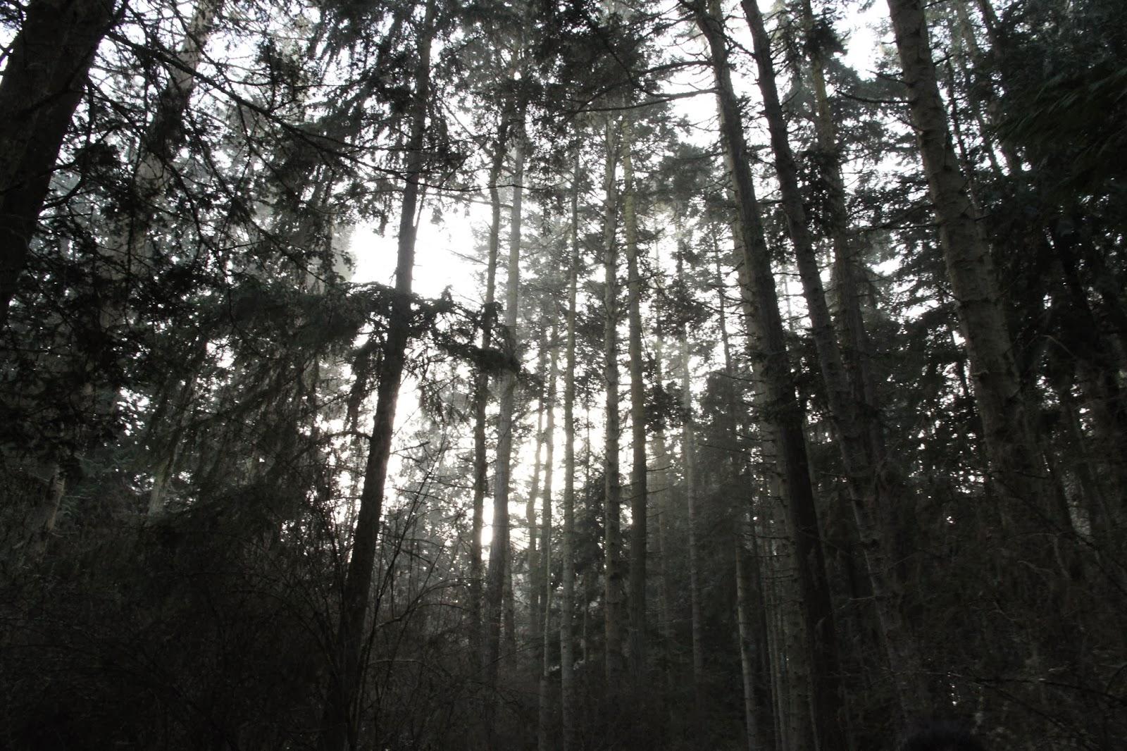 Dungeness-Spit-8.jpg