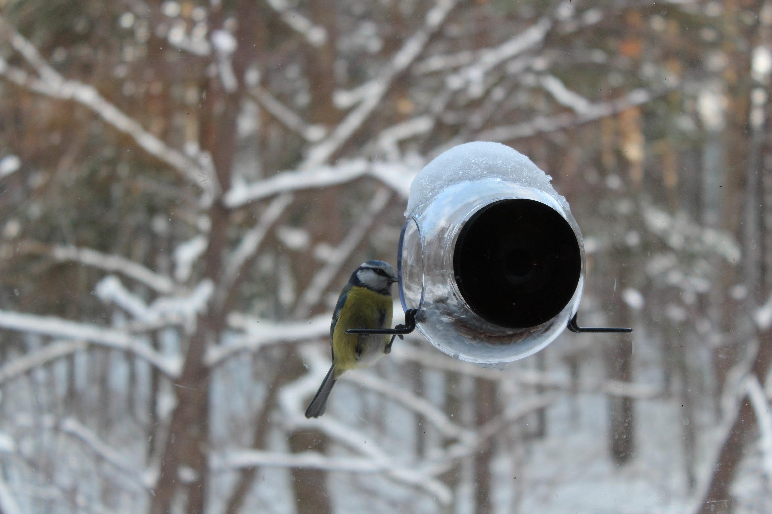 Fågel på fönstret förra vintern
