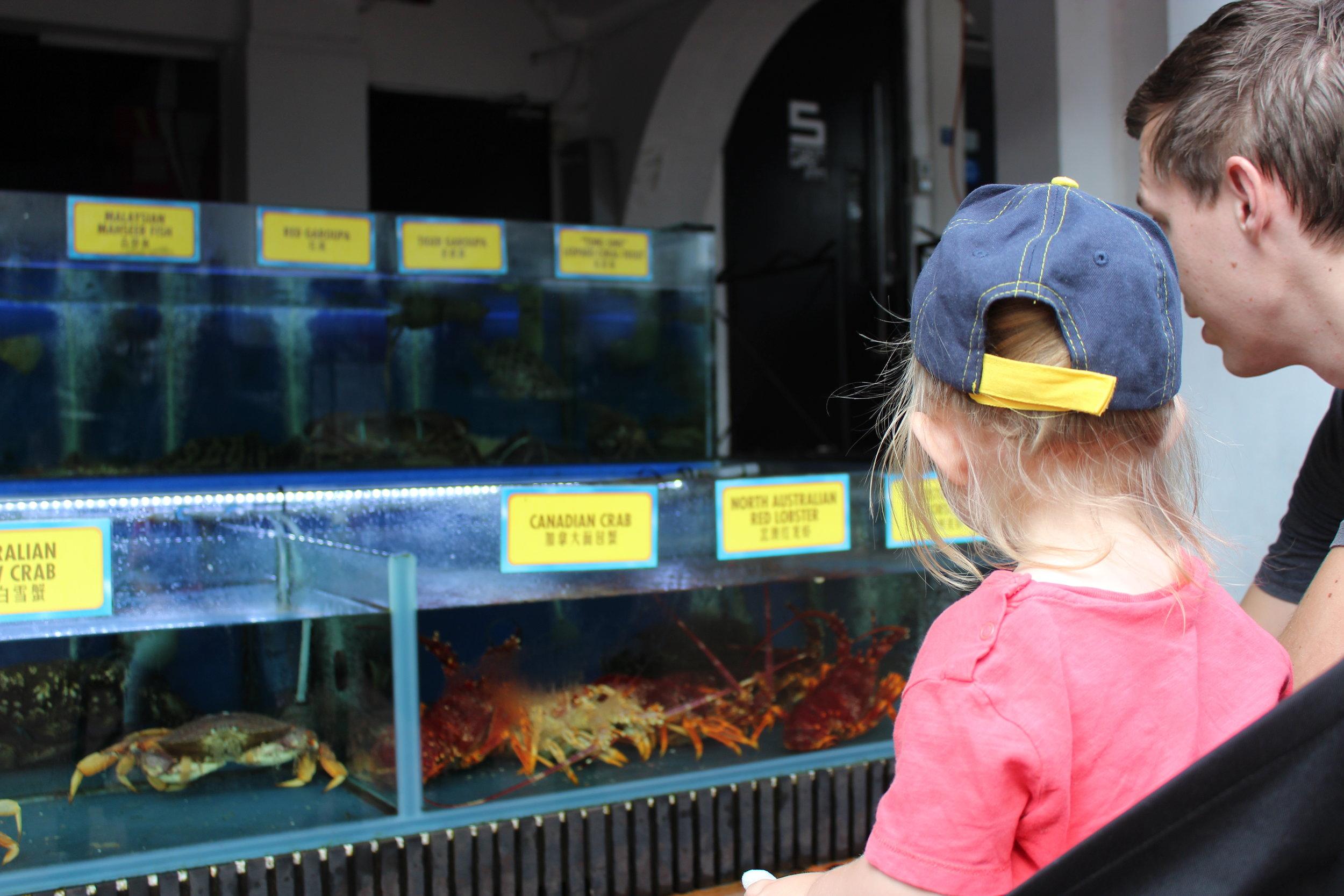Spännande med alla fiskar och vattendjur!