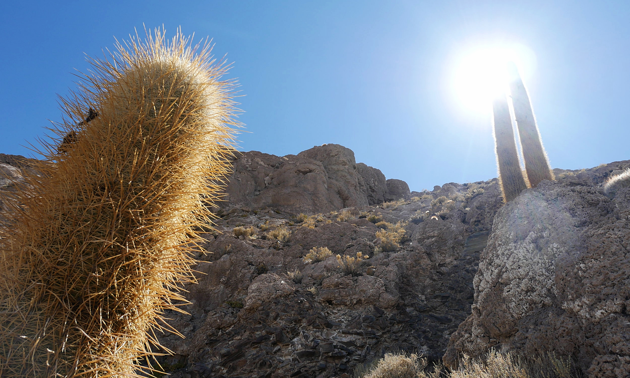 The sunlight catching the cacti