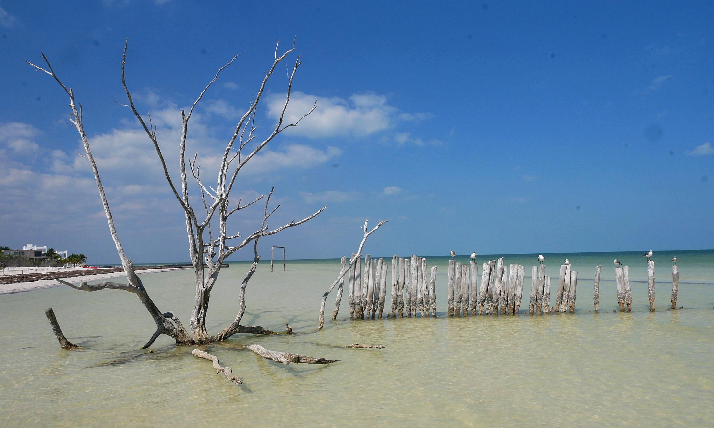 holbox island mexico driftwood