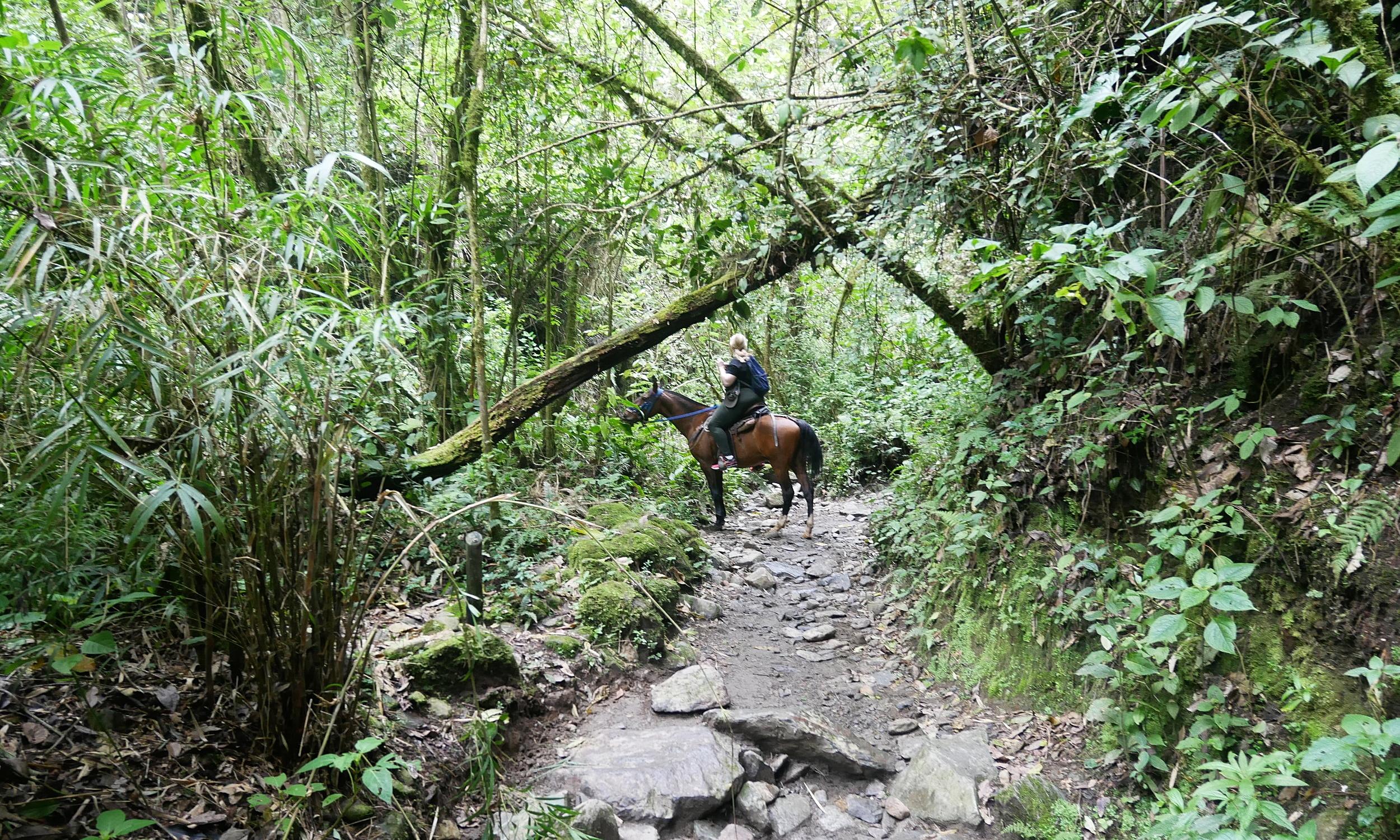 Horse riding through the Cocora Valley
