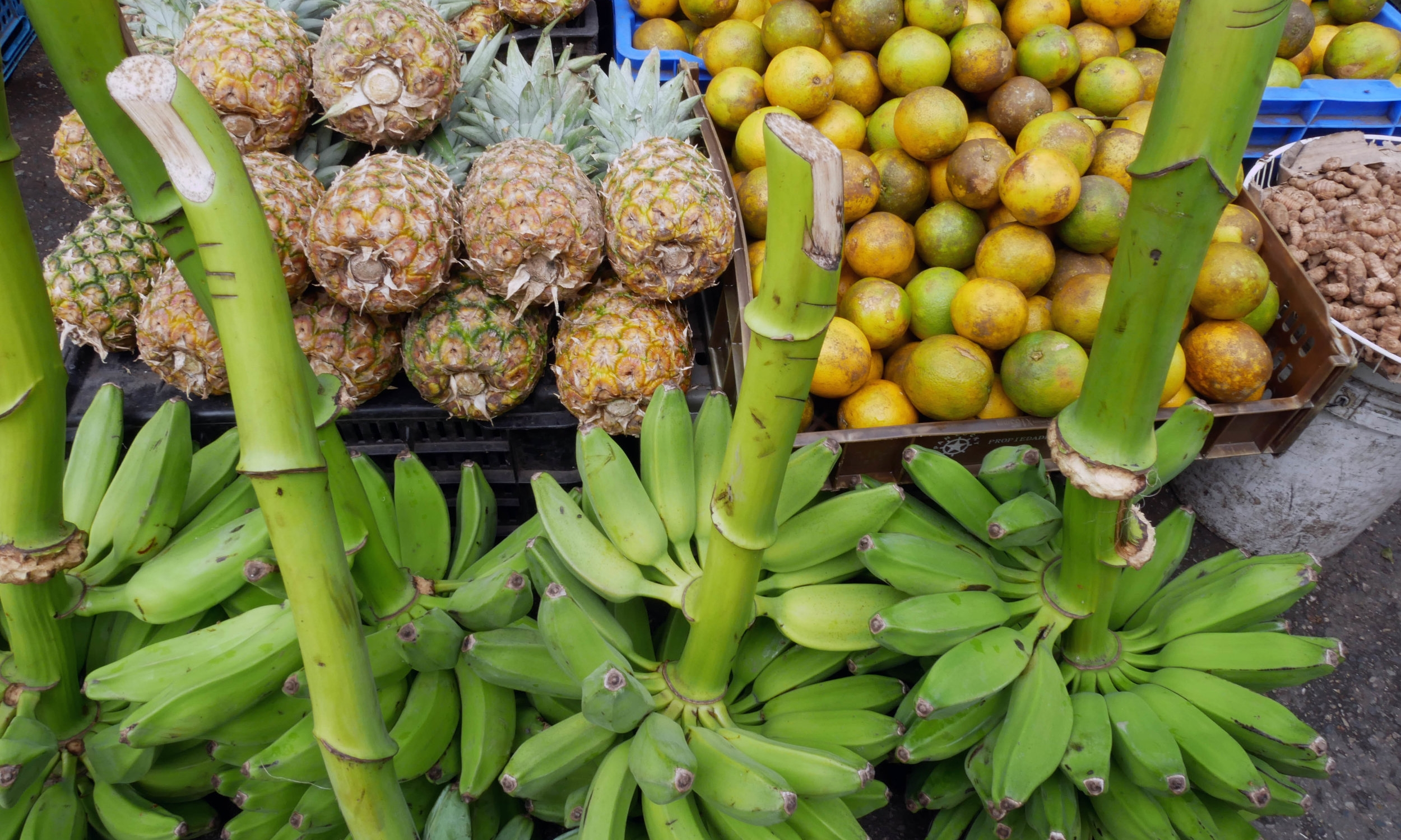 Bananas and pineapples, my favourites
