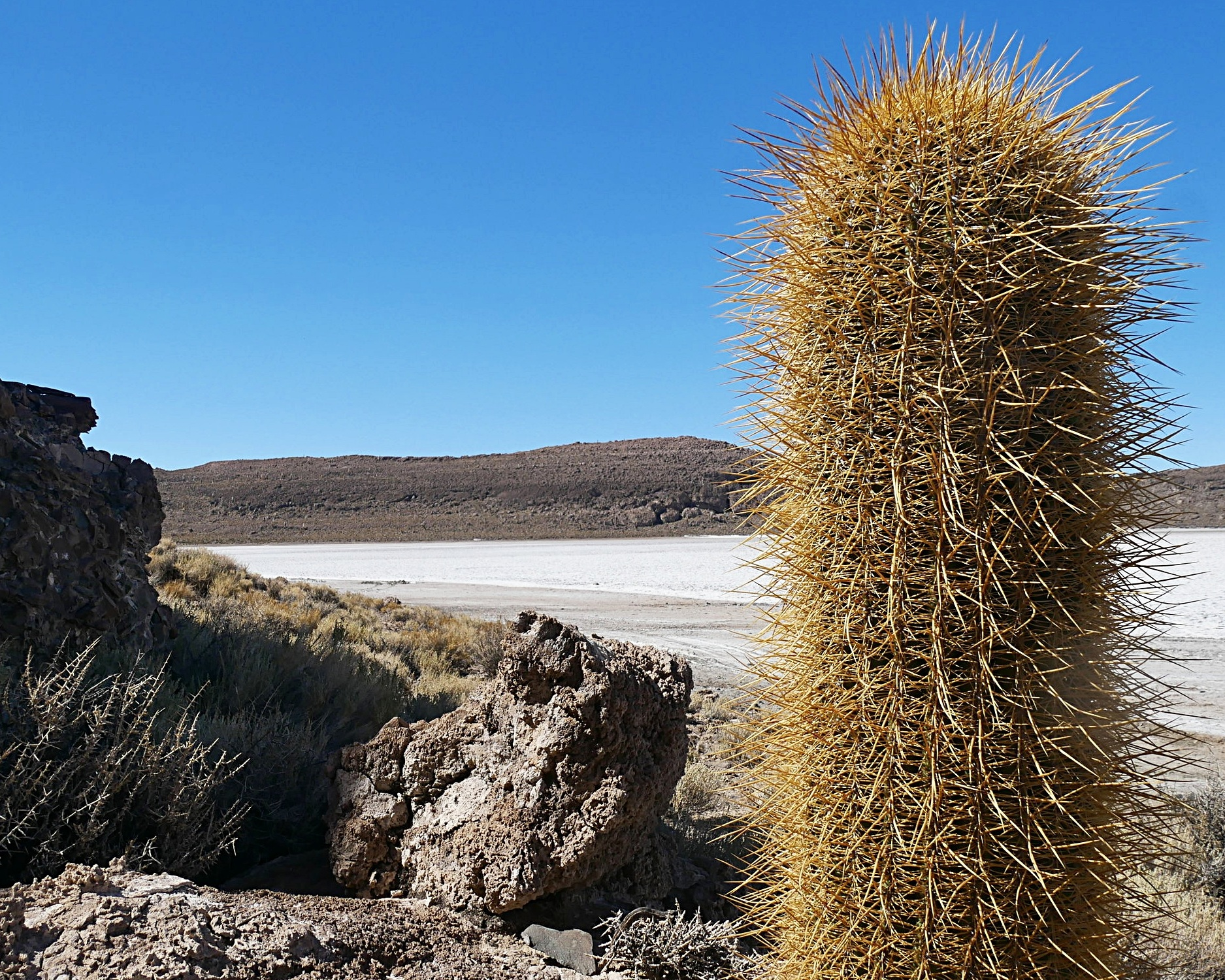 BOLIVIA - otherworldly nature. plus, alpaca