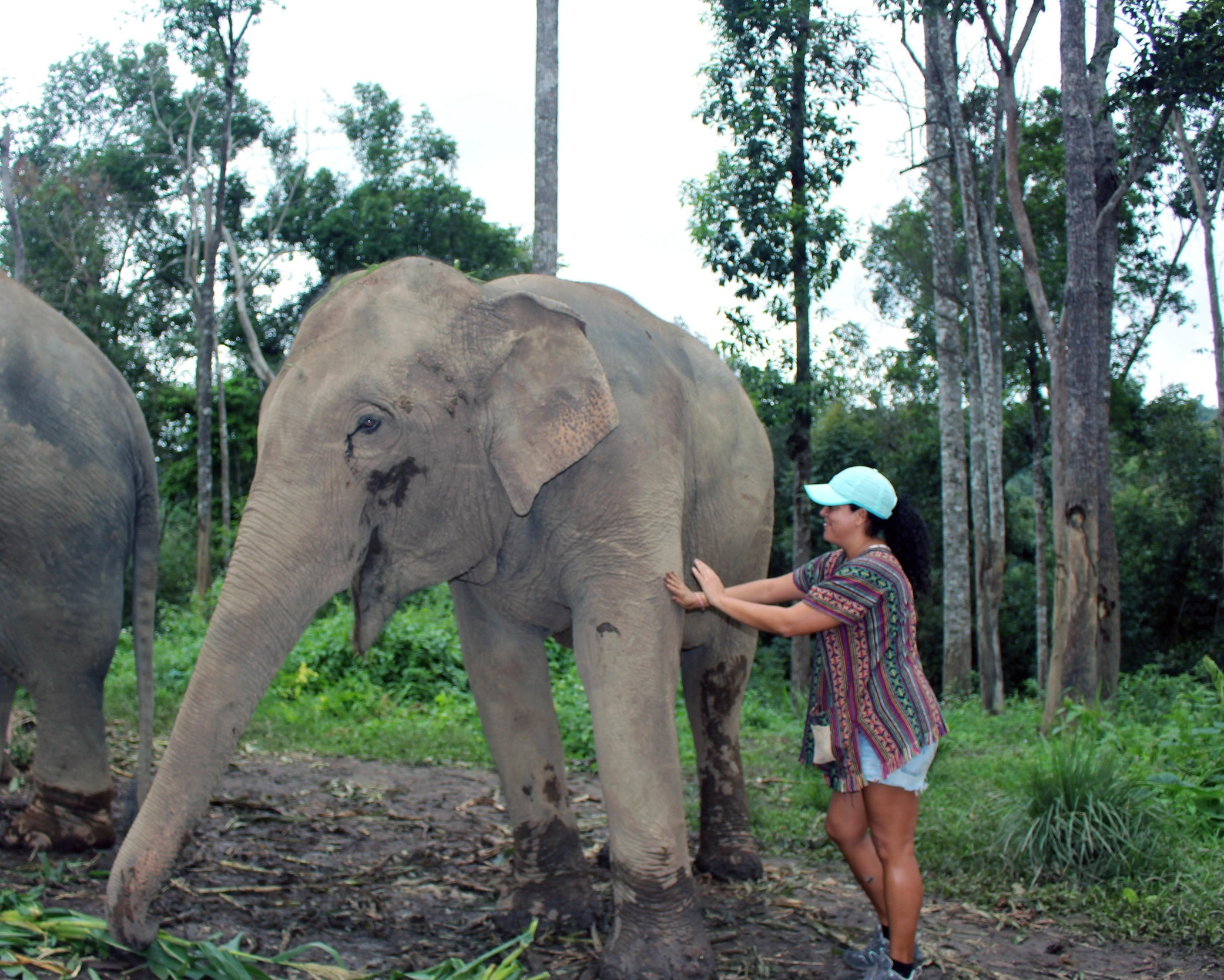 Making friends with the elephants at a Chiang Mai elephant rescue centre