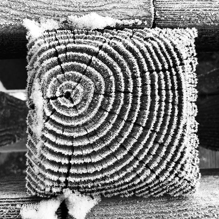 Frozen Woodgrain