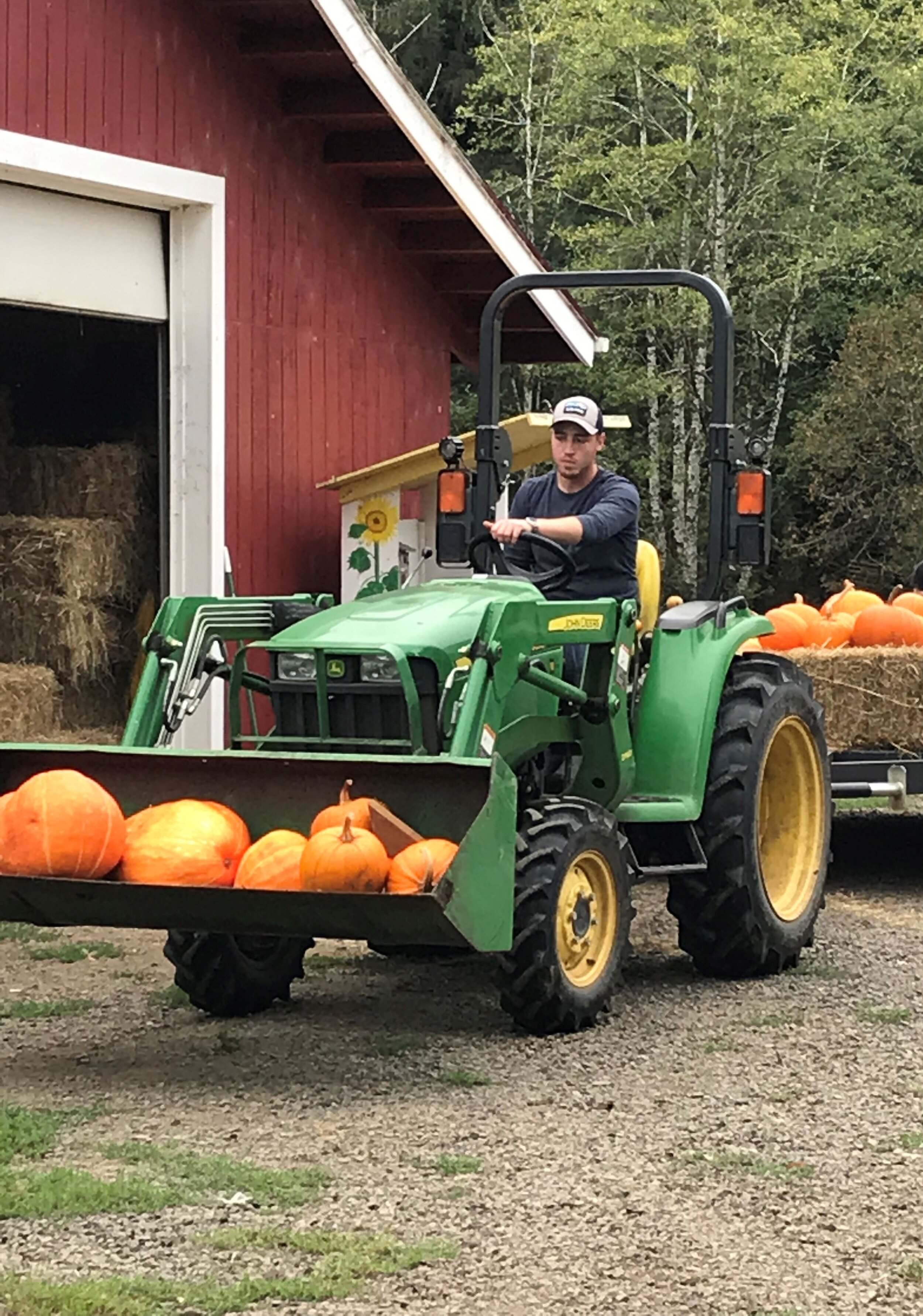 Getting Ready - Bringing in the pumpkins from the field…