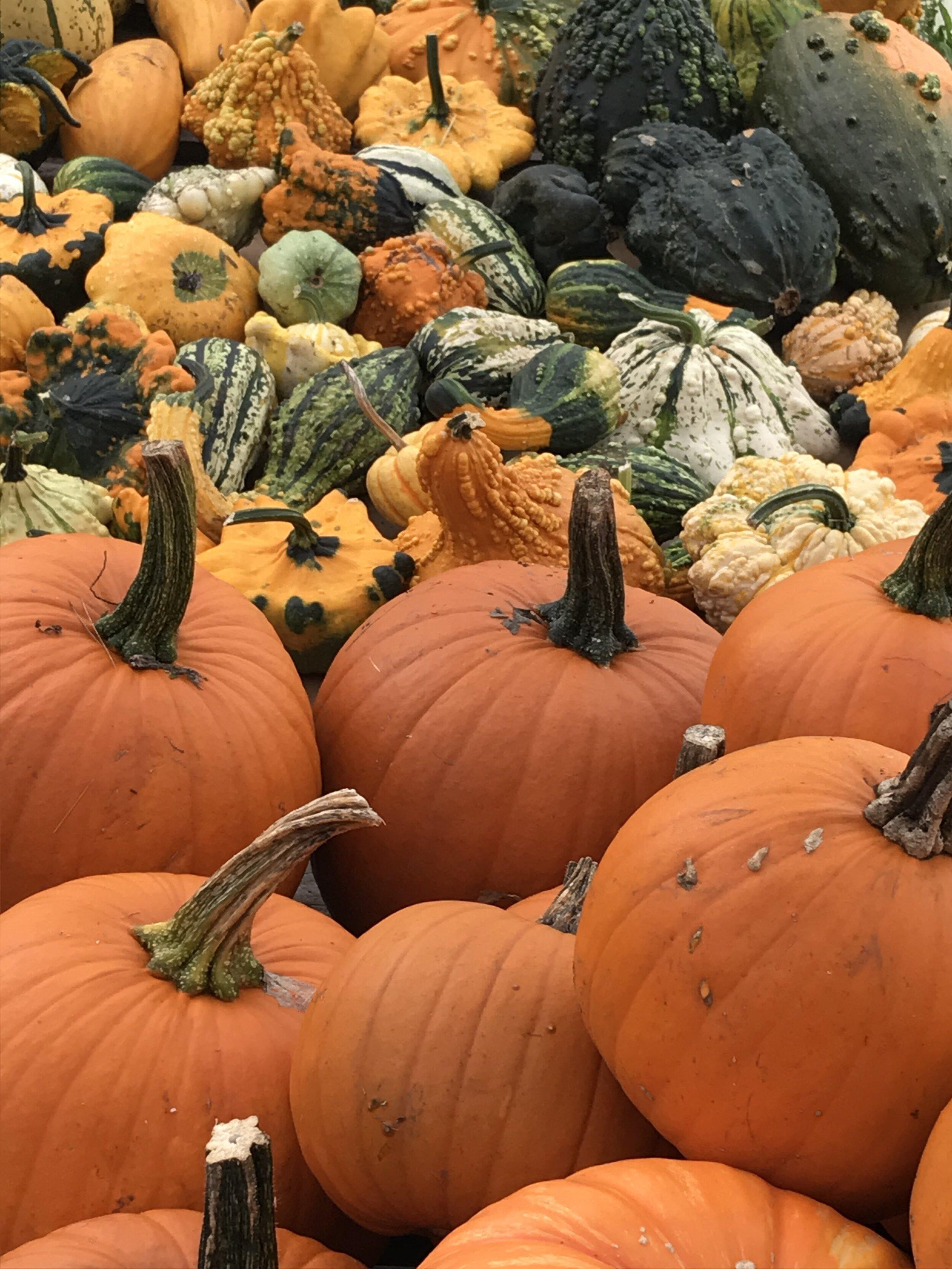 Pumpkin varieties.jpg