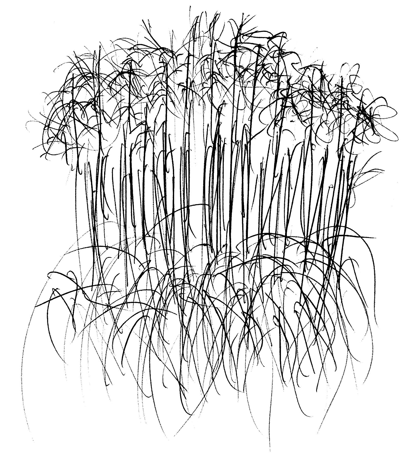 Miscanthus, Single-line, Gardens, Victoria, BC