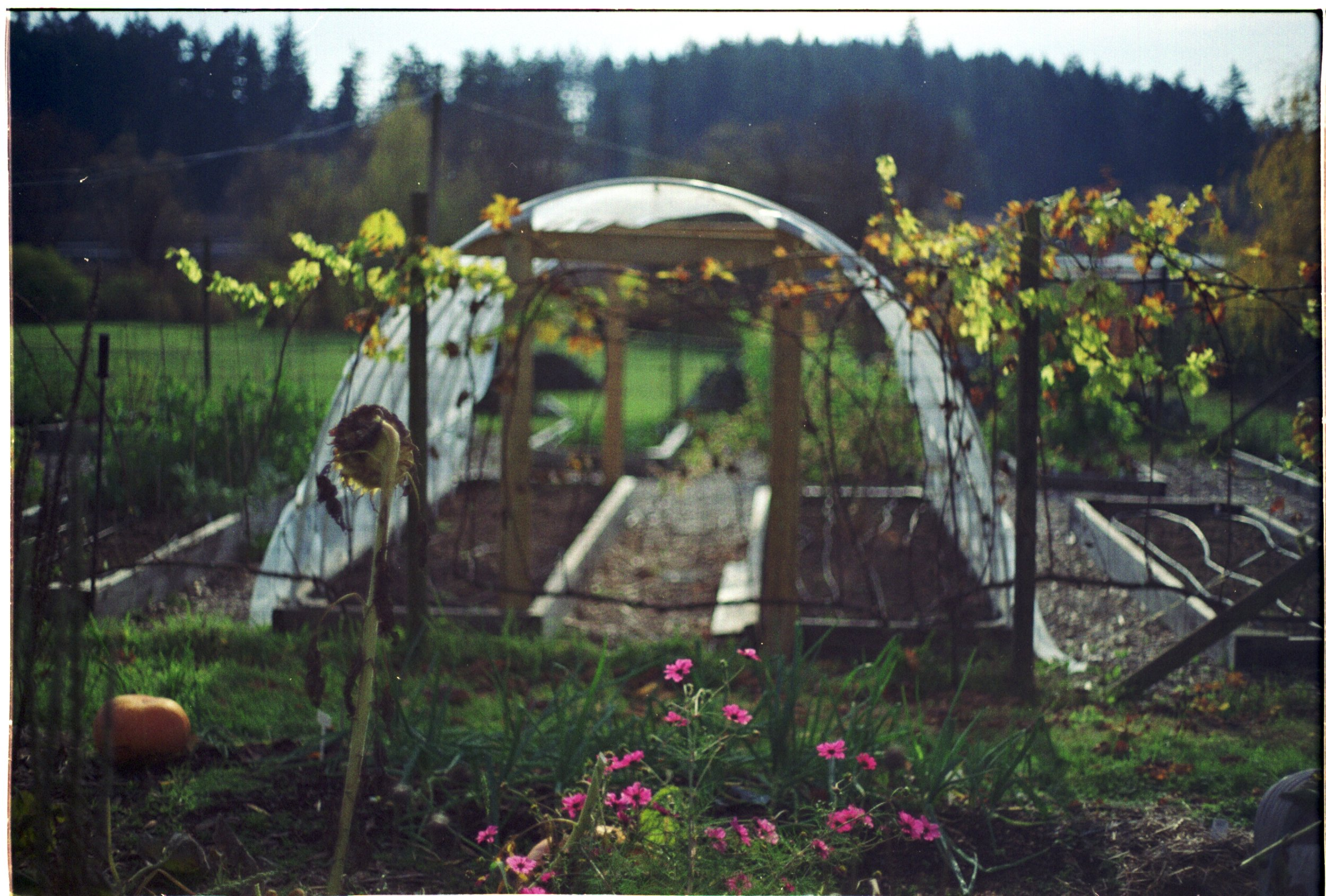 Hoophouse, Veggies, Gardens, Victoria, BC