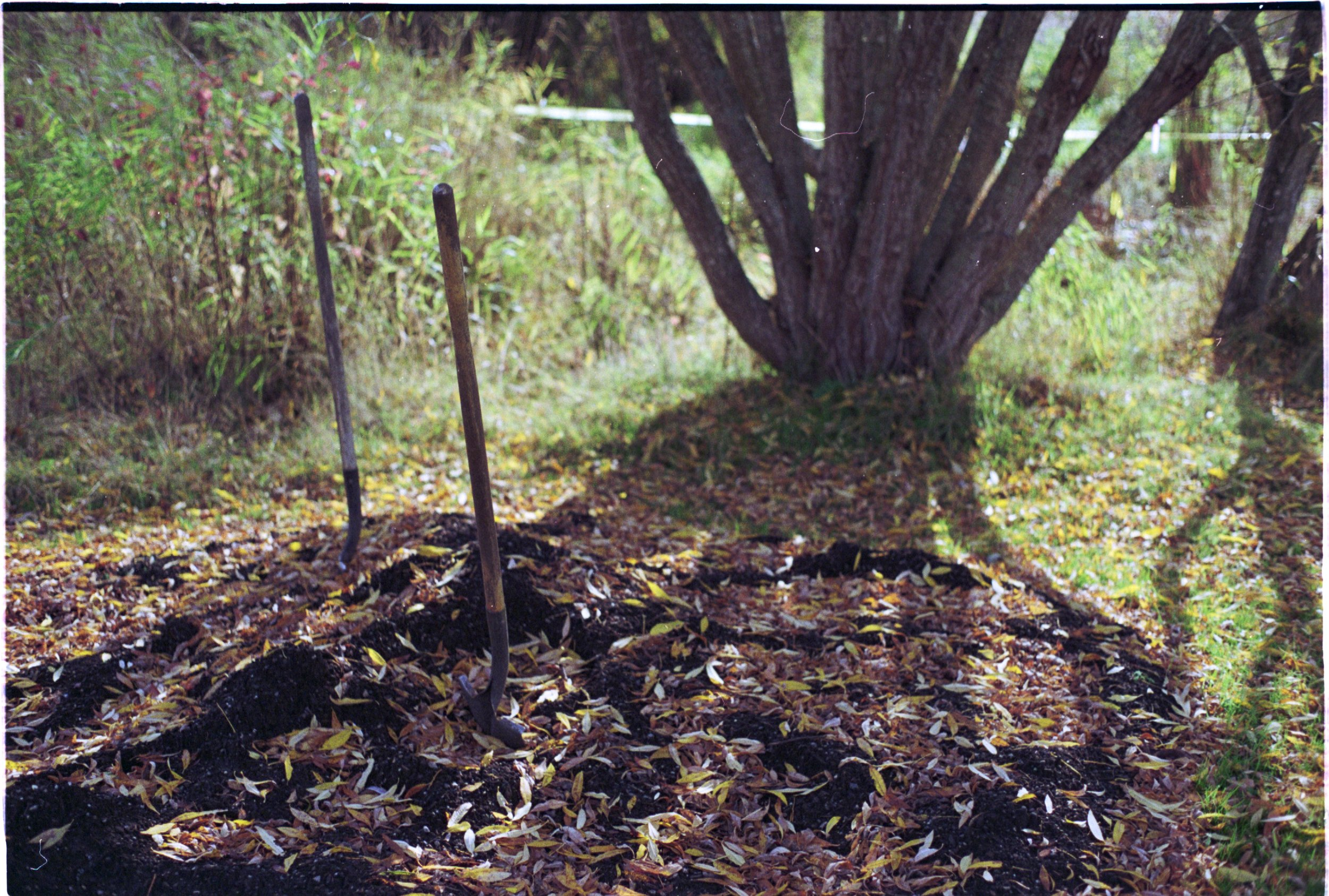 Soil health, Gardens, Victoria, BC