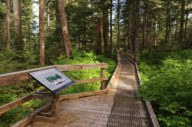 Beaver Falls Karst Trail boardwalk with interpretive sign Prince of Wales Island Alaska