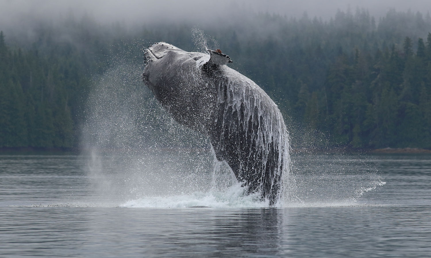 Go whale watching! You might see a humpback whale breaching.