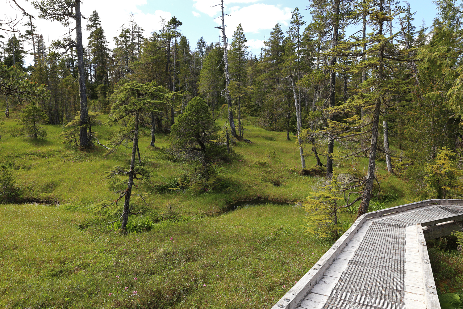 Beaver Falls Karst Trail muskeg in summer on Prince of Wales Island POW Southeast Alaska
