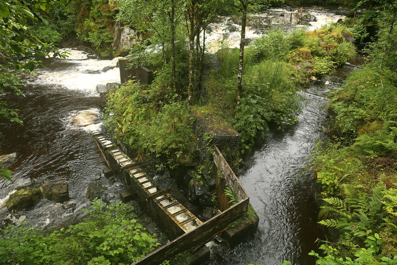 Dog Salmon Creek fish ladder