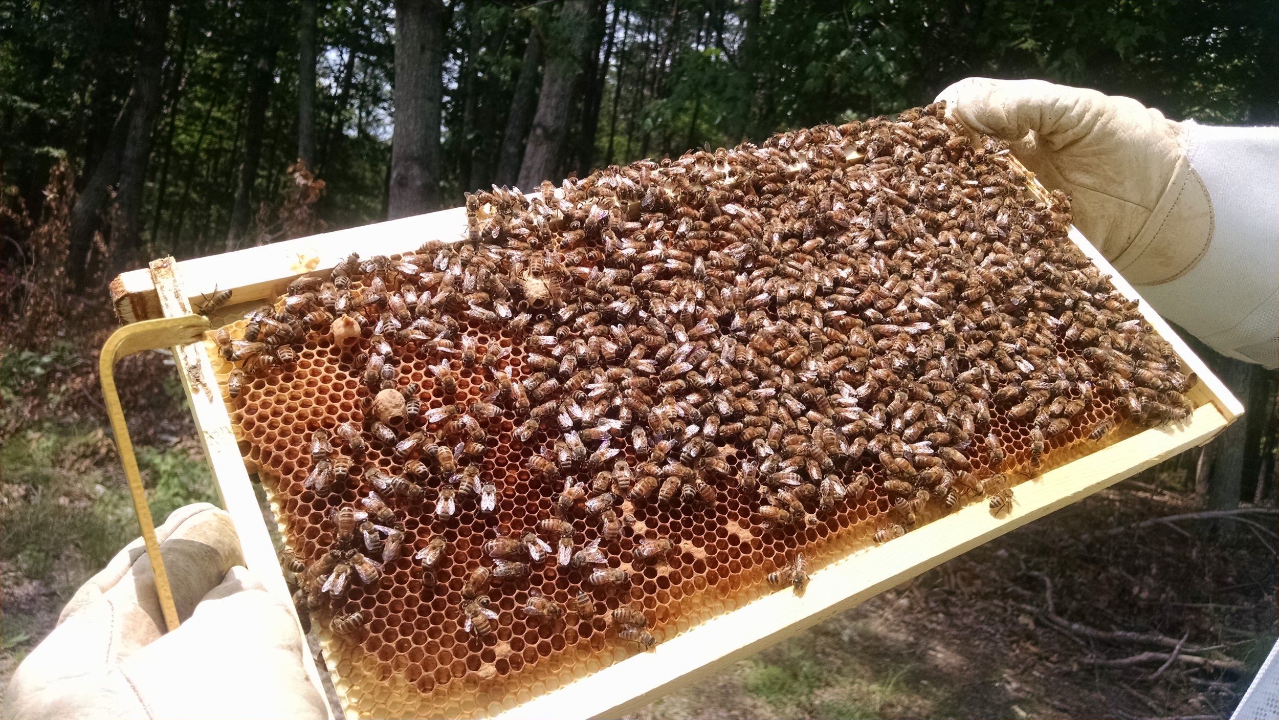 Spread the buzz! Be a beekeeper! -