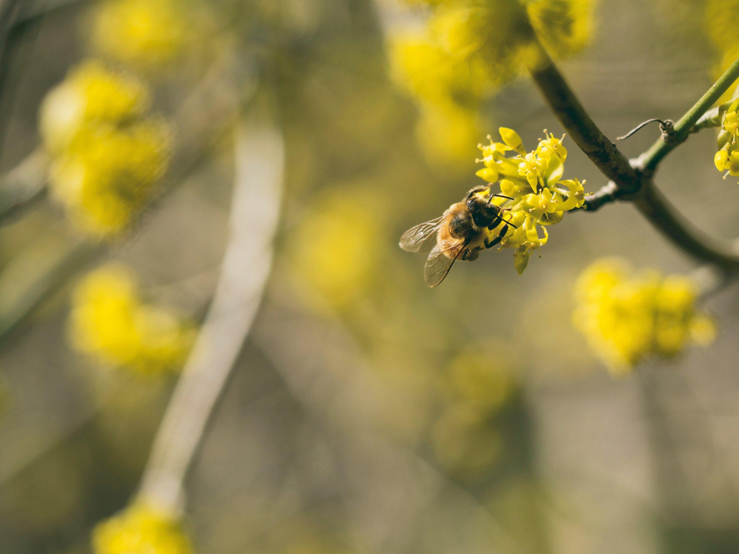 Bee Disease Workshop
