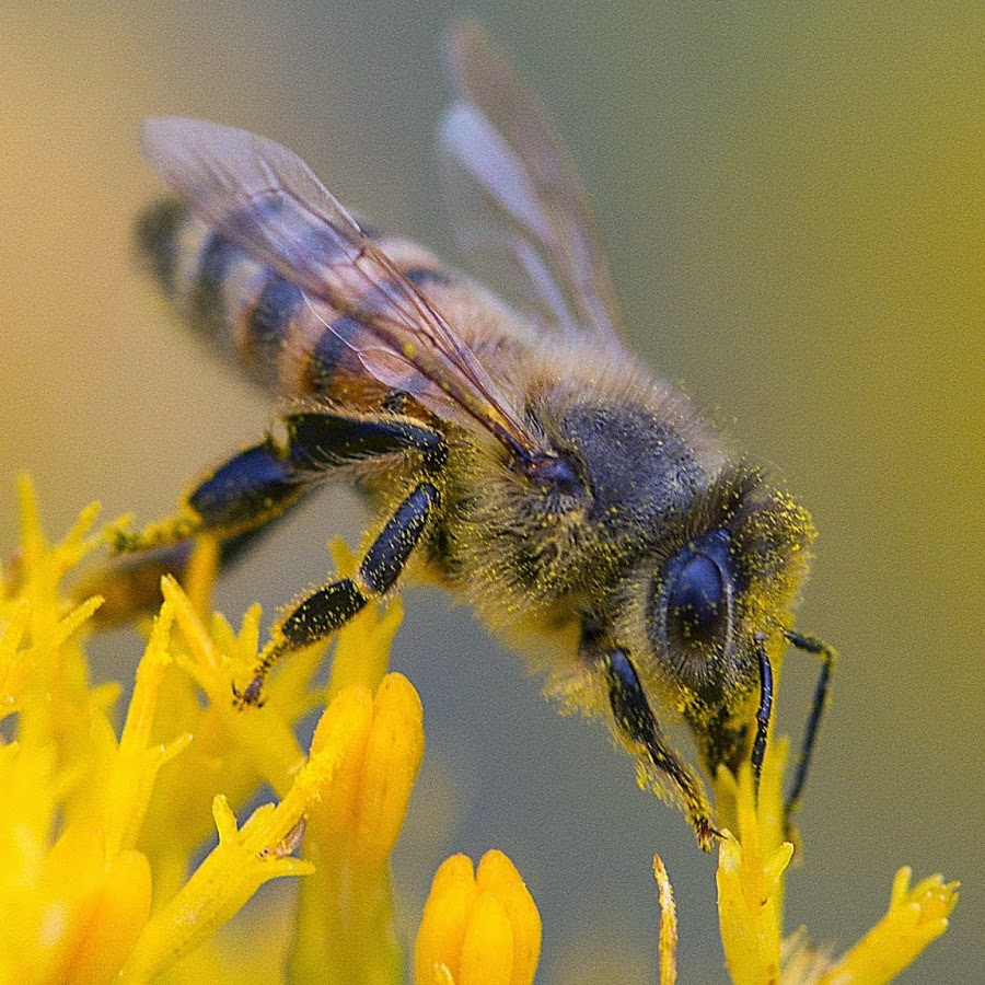 September 2017 Newletter - Keep up with the upcoming news and events from the Piedmont Beekeepers Association!