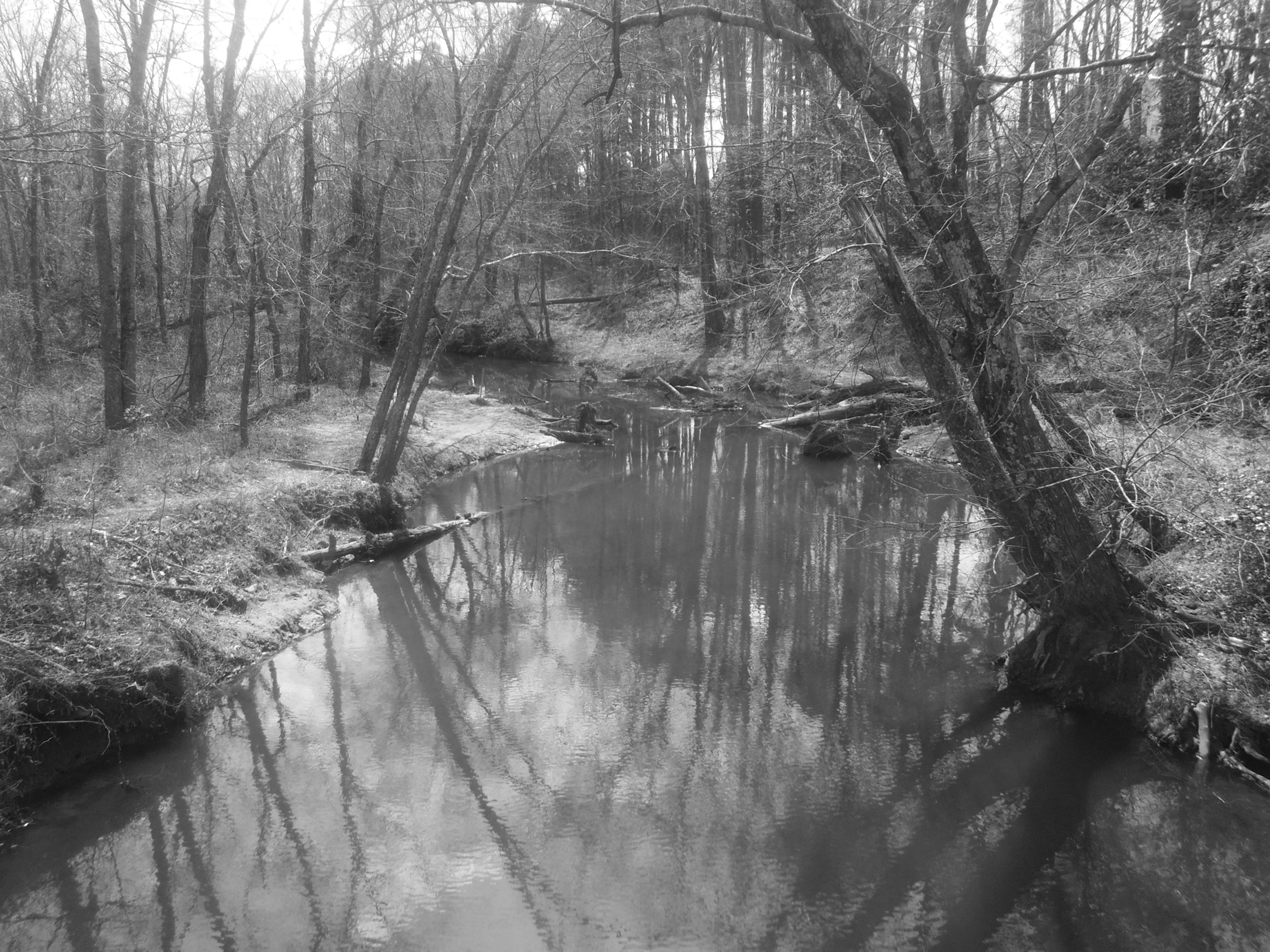 black and white trees along creek