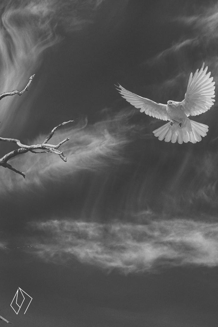 bird landing.jpg