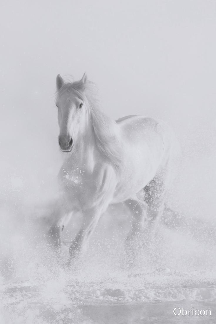 #horse in #snow.jpg
