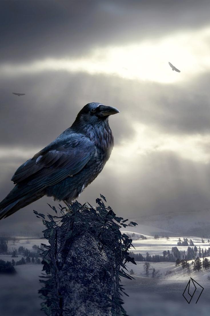 #raven.jpg