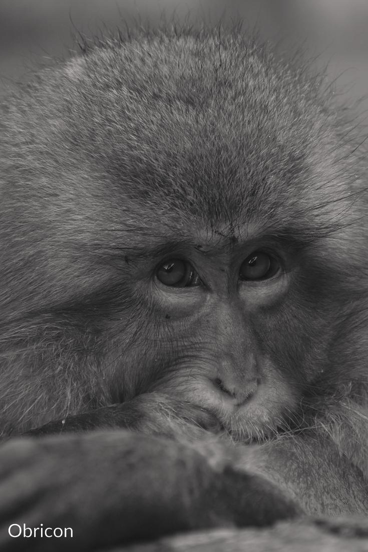 #baboon.jpg