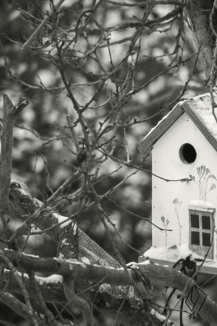 #birdhouse.jpg