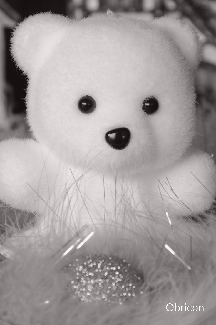 #teddy.jpg