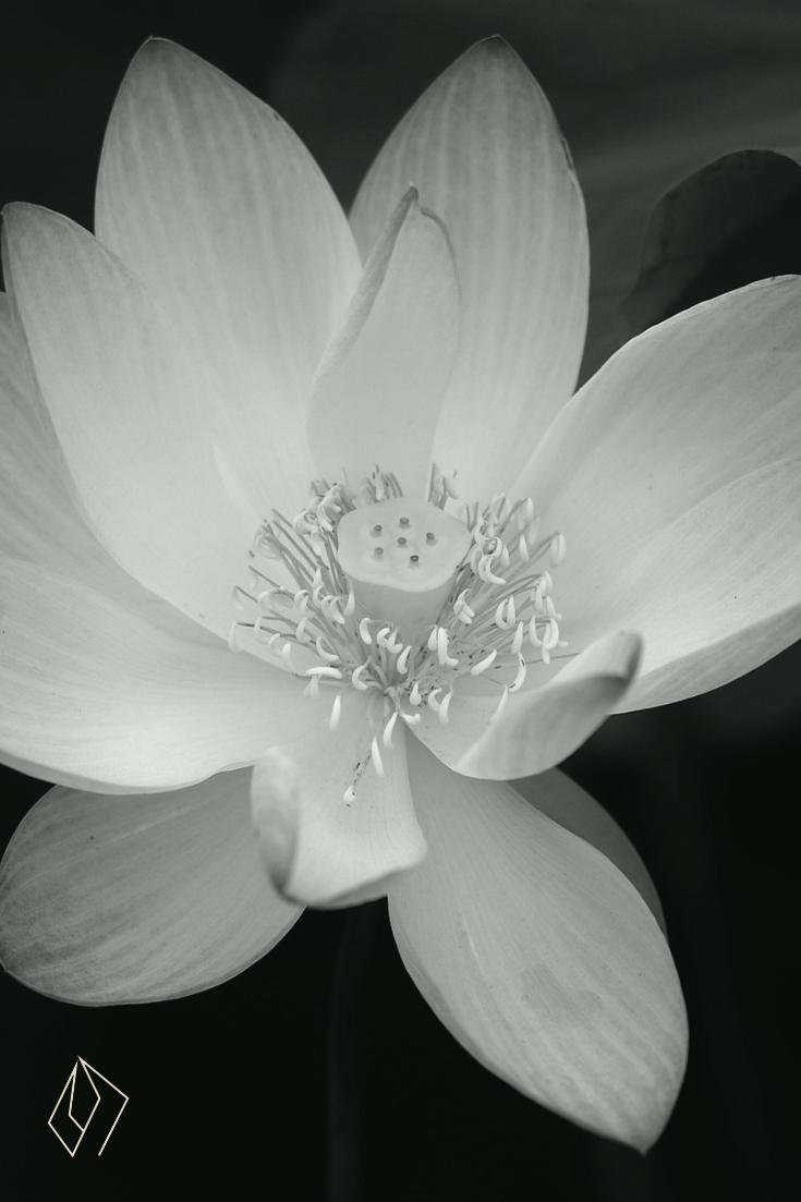 #flower.jpg
