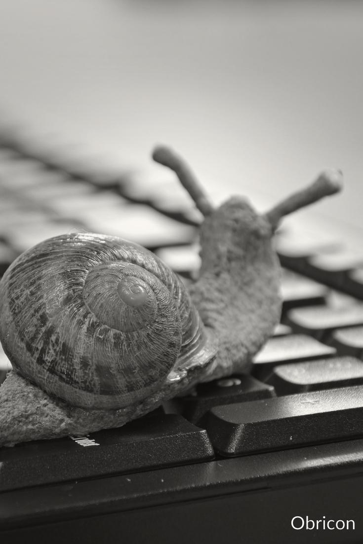#snail.jpg