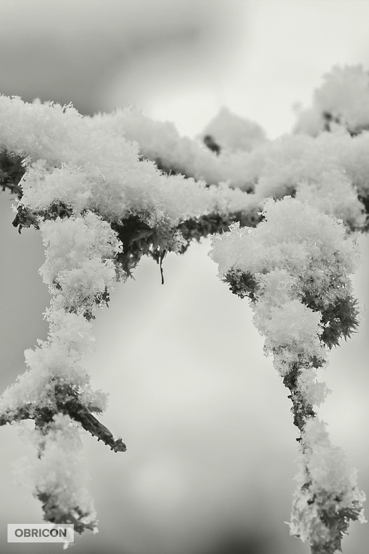 #snow.jpg