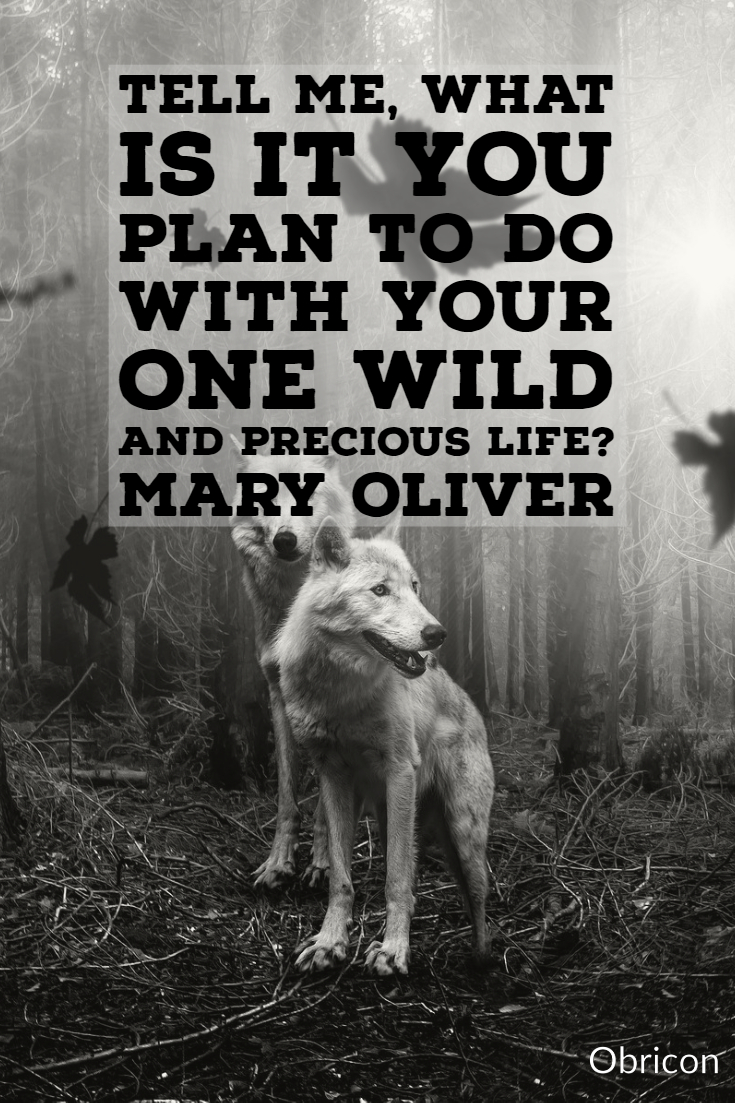 Tell me, what is it you plan to do with your one wild and precious life_  Mary Oliver.jpg