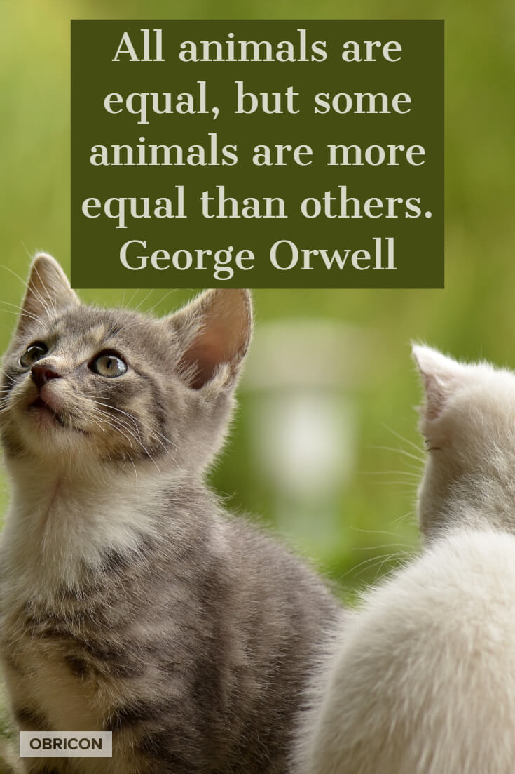 All animals are equal, but some animals are more equal than others. George Orwell.jpg