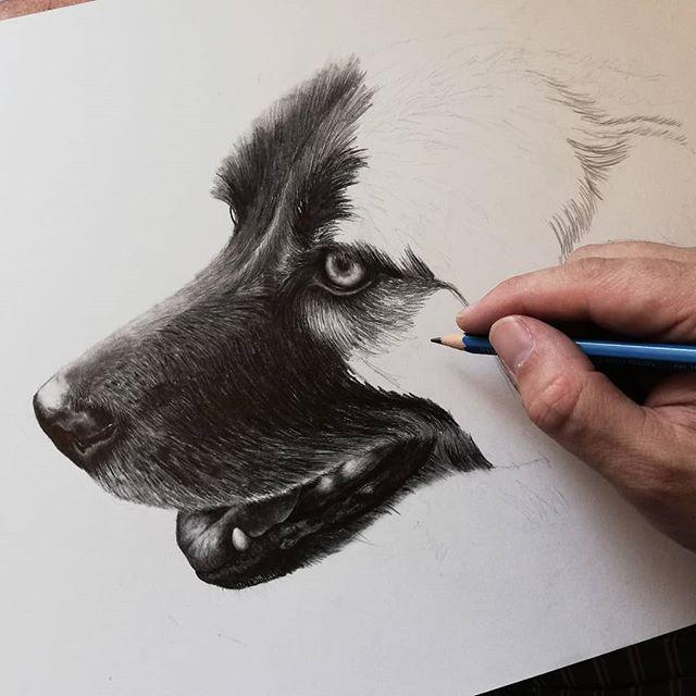 Work in progress from a recent commission. Love drawing puppers! 🐕🎨 . .  #finnharperartwork #drawing #pencil #artwork #commission #portrait #irish #pencildrawing #musician #irishartist #irishartistsofinstagram #irishart #ireland #irishmusician #dogart #doggo #puppy #petsofinstagram #dogs #instaart #staedtler #instagood #instadaily #instagram #charcoal #pencilart #giftideas #labrador #ireland