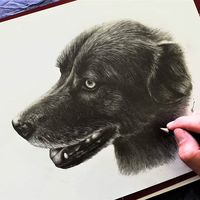 Just reminding everyone that I'm starting to take commissions for the coming months before Christmas. 🎄  Loving that more and more animal commissions are coming in :) This lovely pup was for my clients, mother's 60th birthday 🐶 I went mostly with darker pencils (6B, 7B, 8B) for this one to really make it pop off the page. . .  #finnharperartwork #drawing #pencil #artwork #commission #portrait #irish #pencildrawing #musician #irishartist #irishartistsofinstagram #irishart #ireland #irishmusician #dogart #doggo #puppy #petsofinstagram #dogs #instaart #staedtler #instagood #woof #collie #husky #painters_pro #weddingideas #giftideas