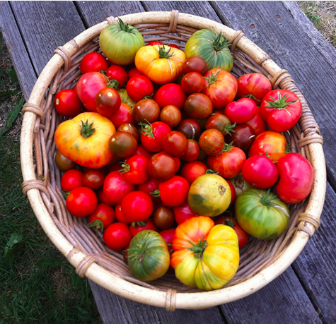 Basket of Tomatoes.png