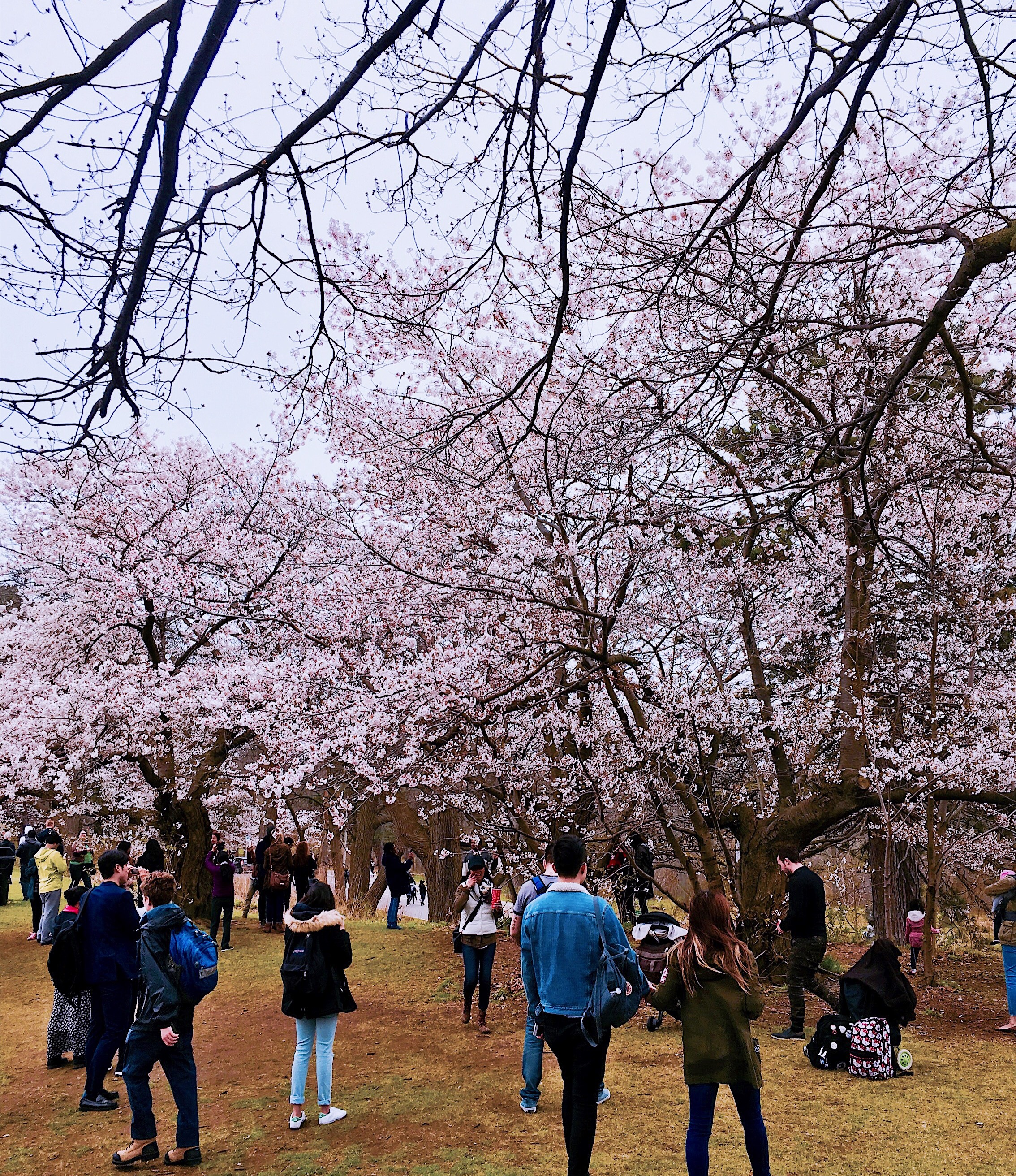 Nature Shots & Cherry Blossoms - High Park