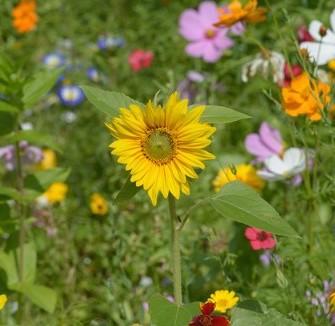 wildflower crop.jpg