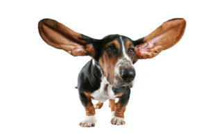 We're All Ears!